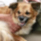 Alessio Borromeo Recupero comportamentale cani aggressivi e fobici