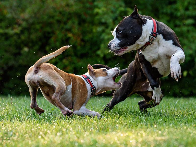Cani interazione