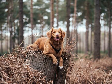 8 modi per sapere se il tuo cane è felice.