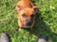 Alessio Borromeo Puppy Training
