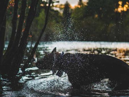 I perché cinofili: perché il cane si scrolla?