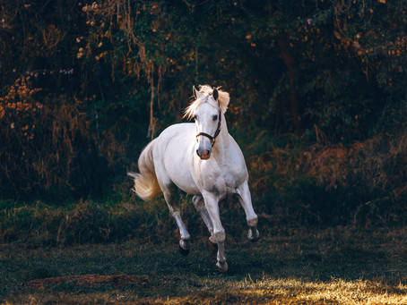 Di cavalli e di cani... Questione di spazi