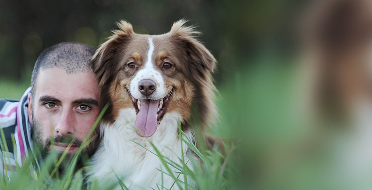 educatore cinofilo on line milano australian shepherd