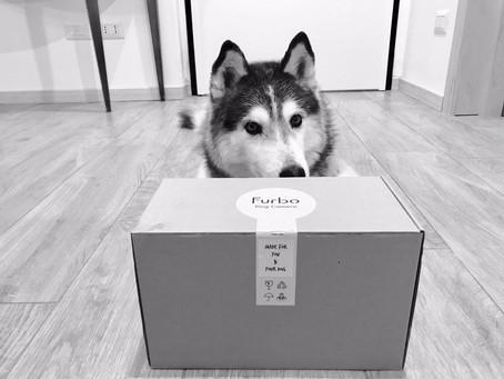 FURBO, una videocamera per cani!