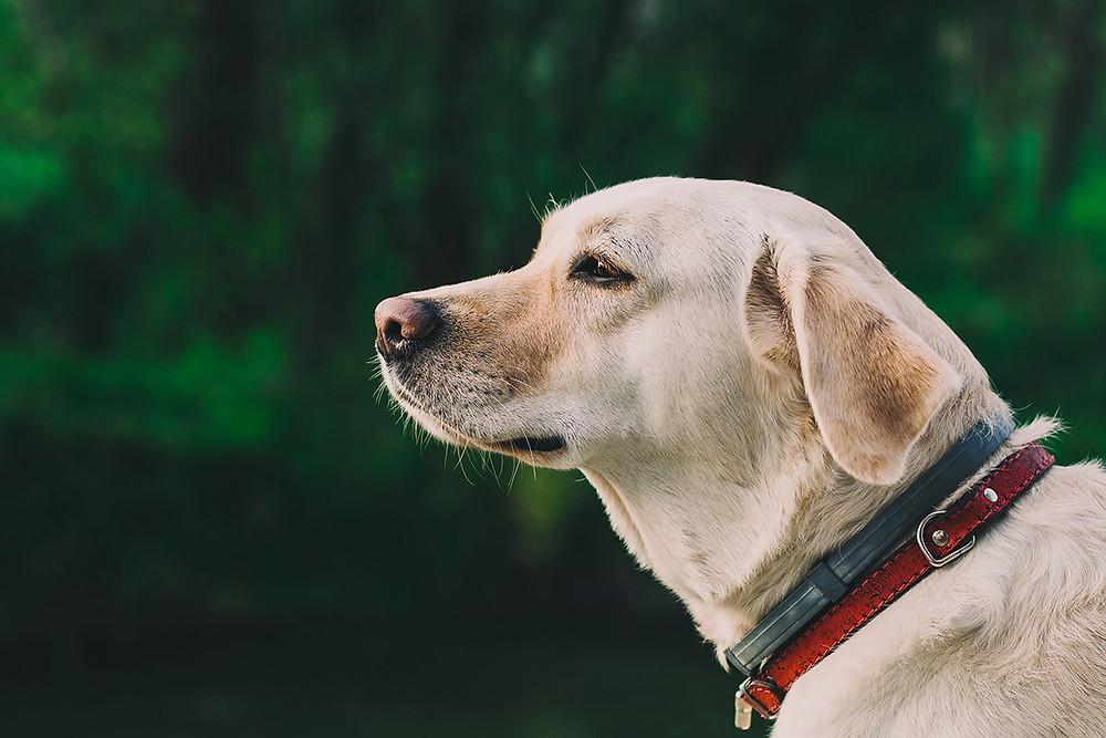 scegliere cane canile