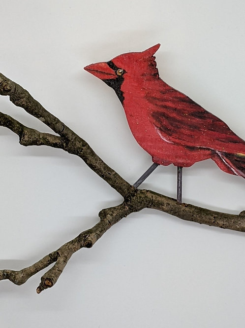 Cardinal by Annie Wandell