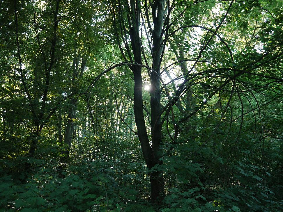 Christiaan Tonnis - Bäume 2
