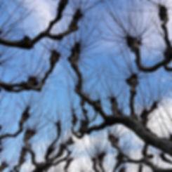 Christiaan Tonnis - Blick in den Himmel