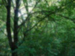 Christiaan Tonnis - Bäume 3