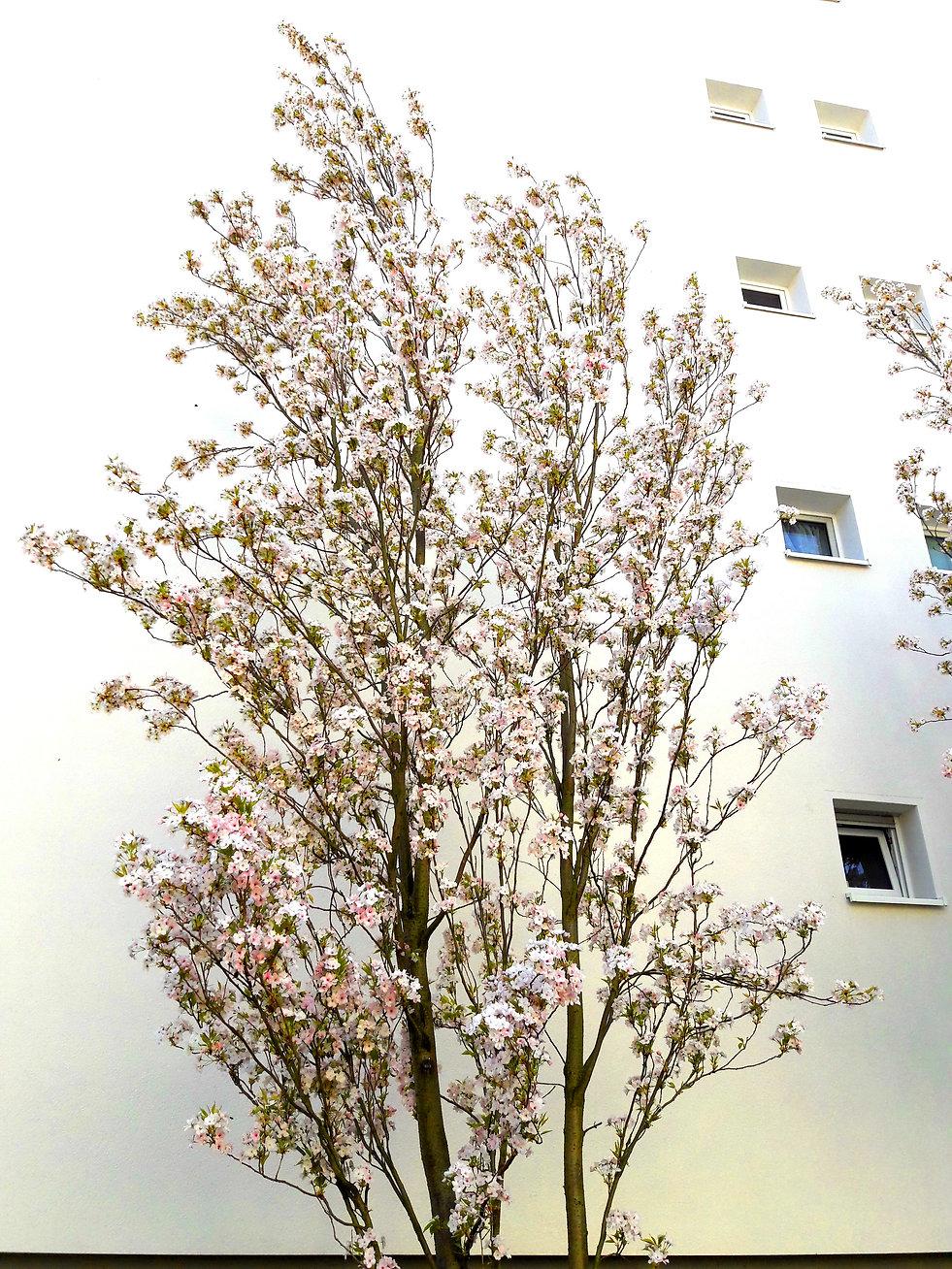 Christiaan Tonnis Baum vor Hauswand