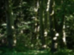 Christiaan Tonnis - Bäume 1