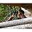 Thumbnail: Swarovski Optik SLC 15x56 W B