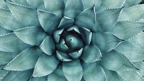 image-from-rawpixel-id-3864386-original.jpg