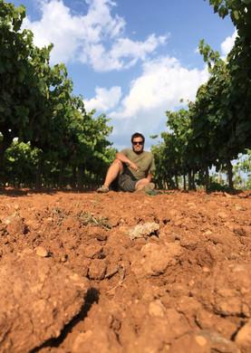 7103 Sebastià y sus viñas