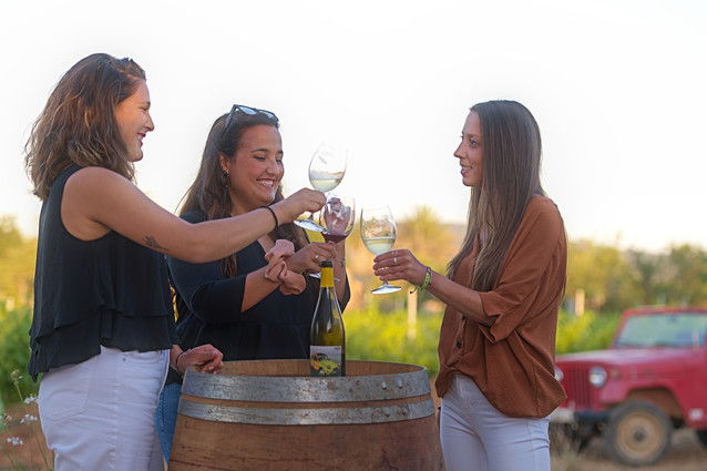 7103 Petit Celler cata de vinos