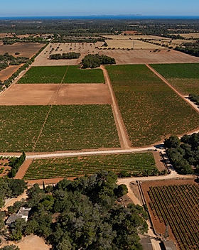 Bodegas Bordoy from above Fly Me & Wine