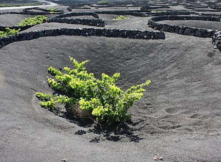 Unearthing Canarian Wines