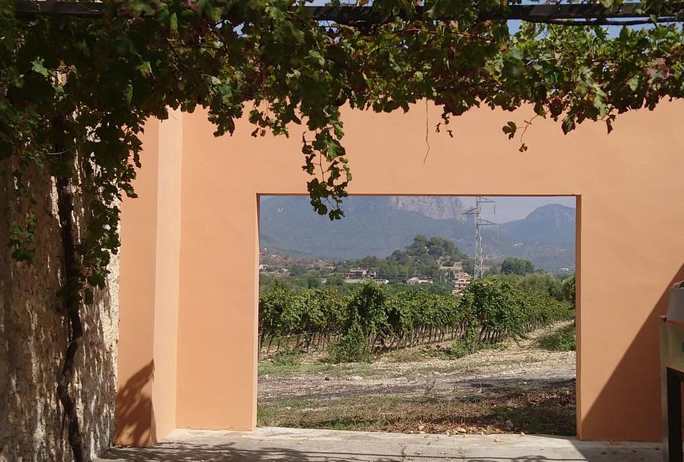 Bodega Olorón framed view