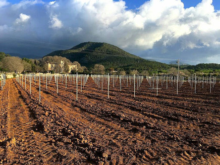 7103 viñas nuevas