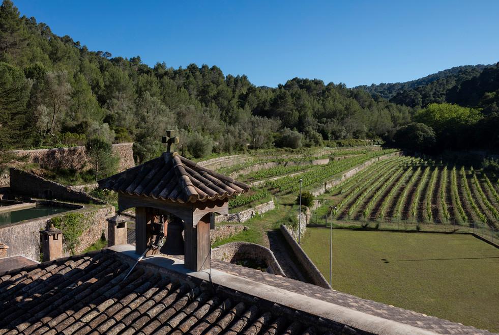 Overlooking the vines at Son Vich de Superna