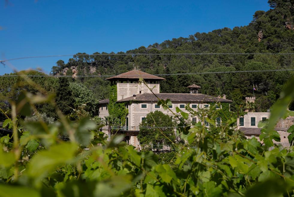 Son Vich de Superna amongst the vines