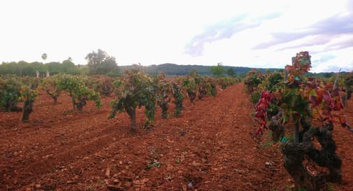 7103 las viñas cambiando de color