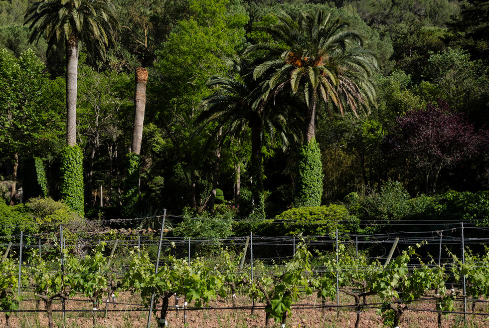 Countryside view at Son Vich de Superna
