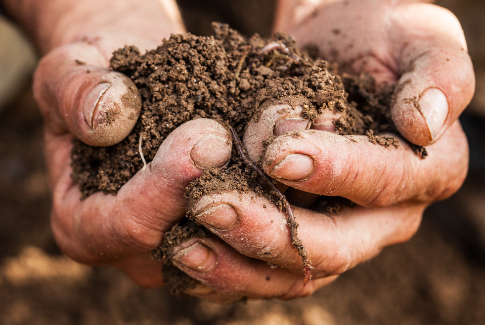 The soil is of great importance