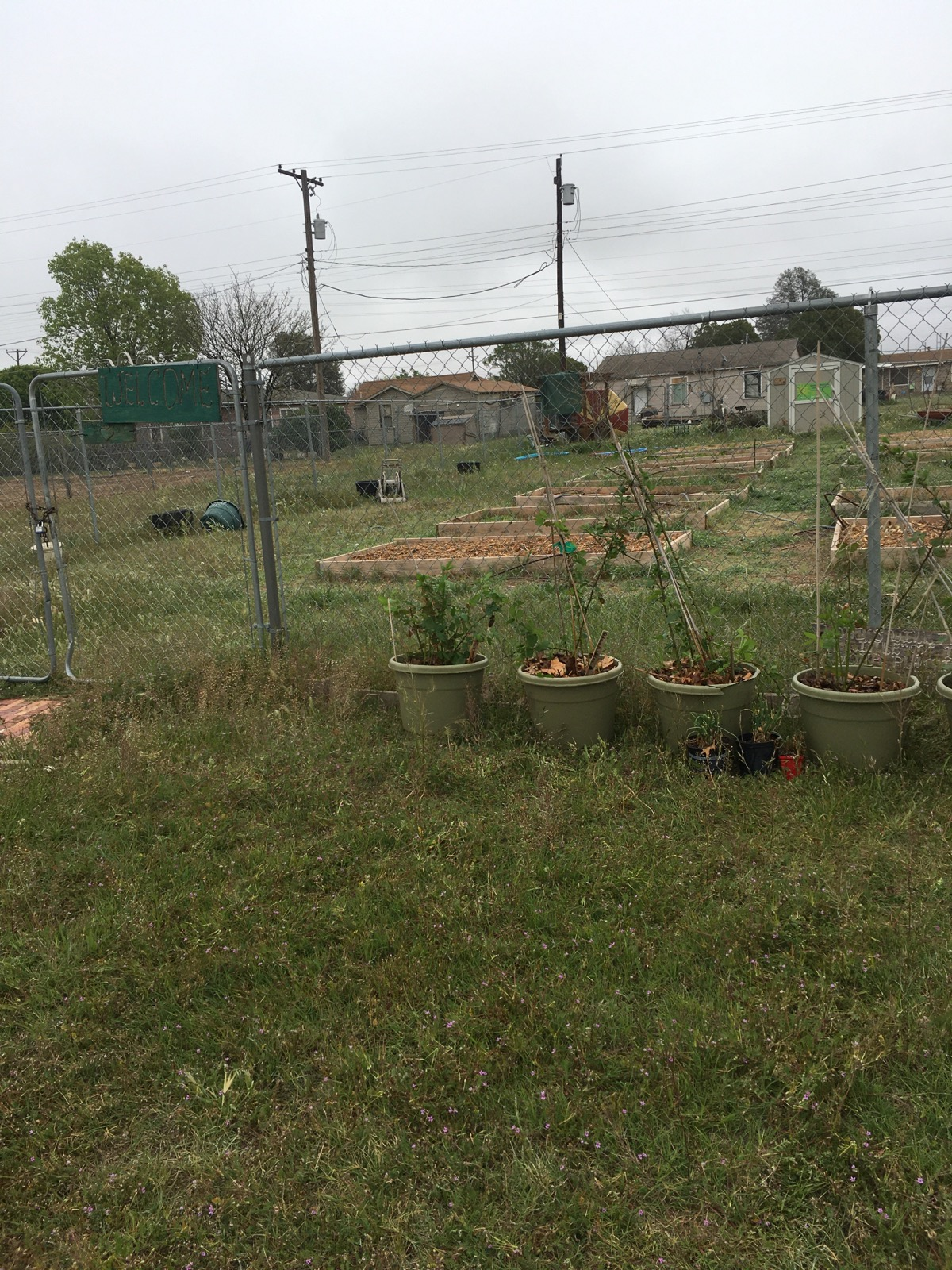 BOOKER T. WASHINGTON COMMUNITY GARDEN