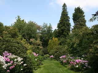 Aankondiging: Bezoek aan het arboretum en de heide van Kalmthout
