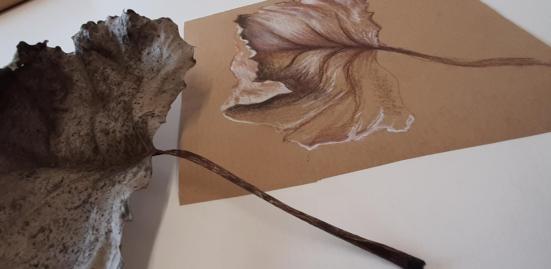 conte leaf.jpg
