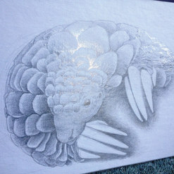 Pangolin. Silverpoint on board
