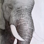 Pachyderm. Pencil on Paper