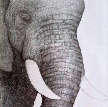 Pachyderm. Pencil on Paper