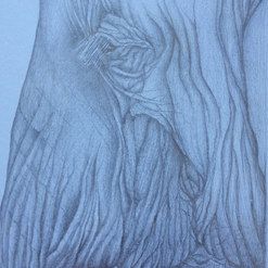Profile. Silverpoint on board