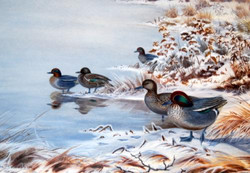 """Ducks on Frozen Ice"""