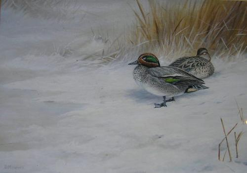 Teal in Snow by David Morrison Reid HENRY