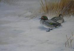 Teal in Snow by David Morrison Reid HENRY