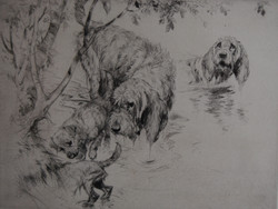 Otter Hounds and Boarder Terriers