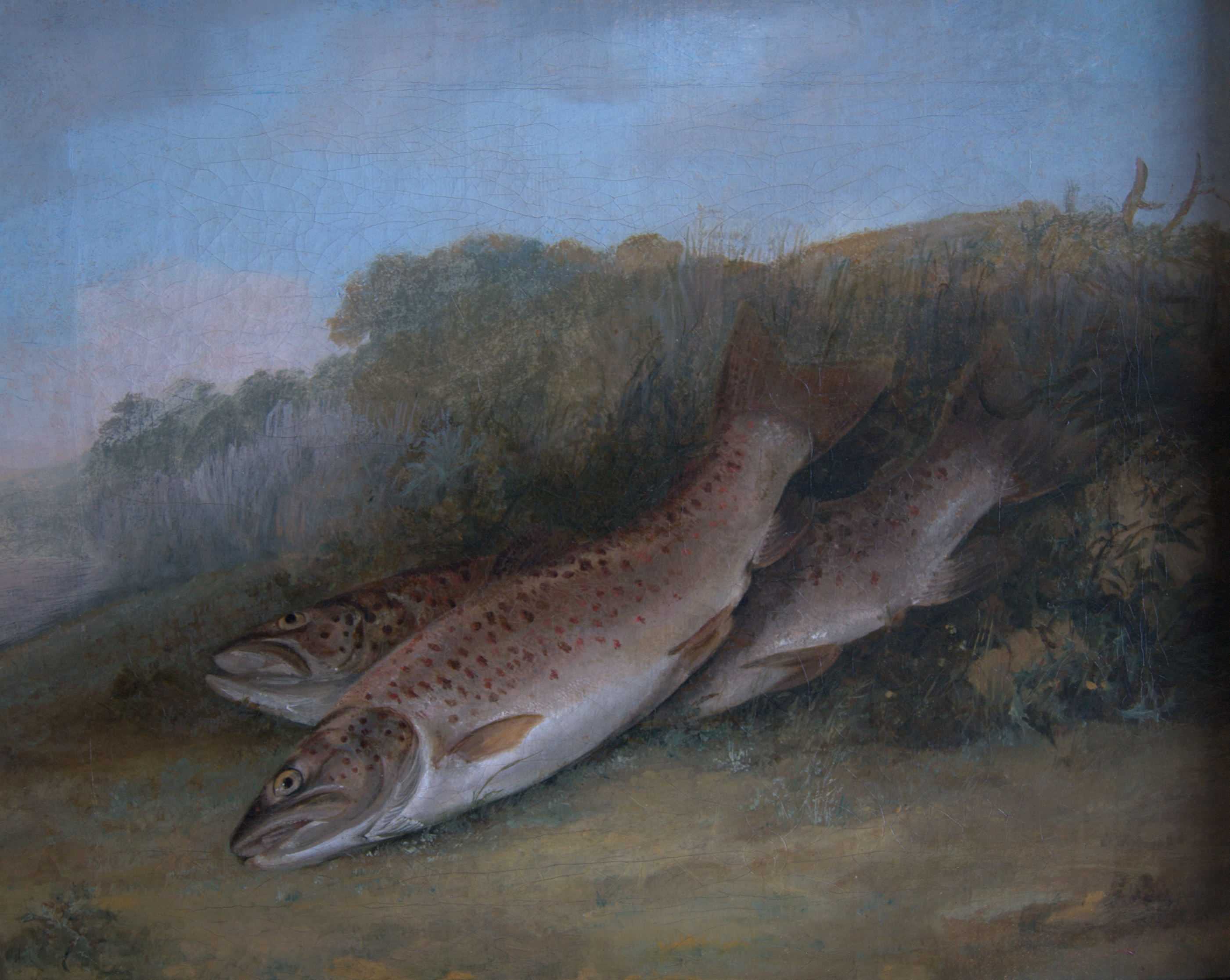 Trout on a Riverbank