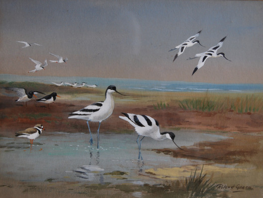 """Avocets, Oystercatchers and Ringed Plovers"""""""