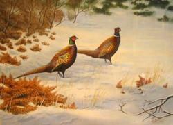 """Pheasants in Snow"""