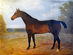 Forester Foaled