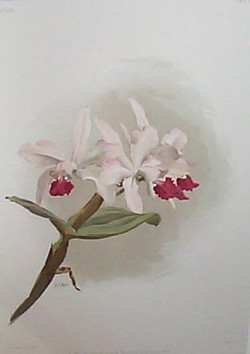 """""""Orchid Collection (set of 32)"""""""