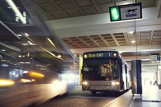 CAT Bus1.jpg