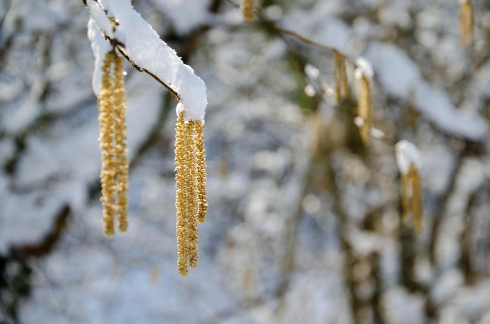 Macro sous la neige