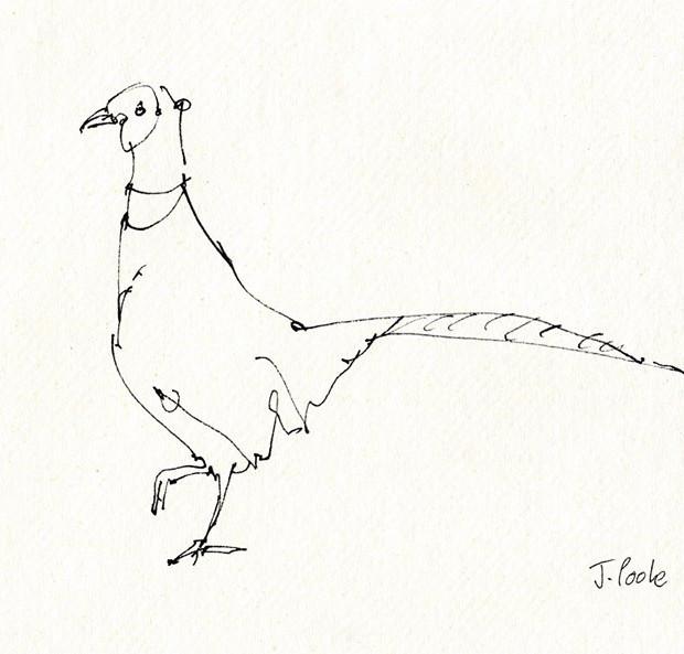 Pheasant 2018