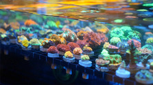 ReefWorx 1.jpg