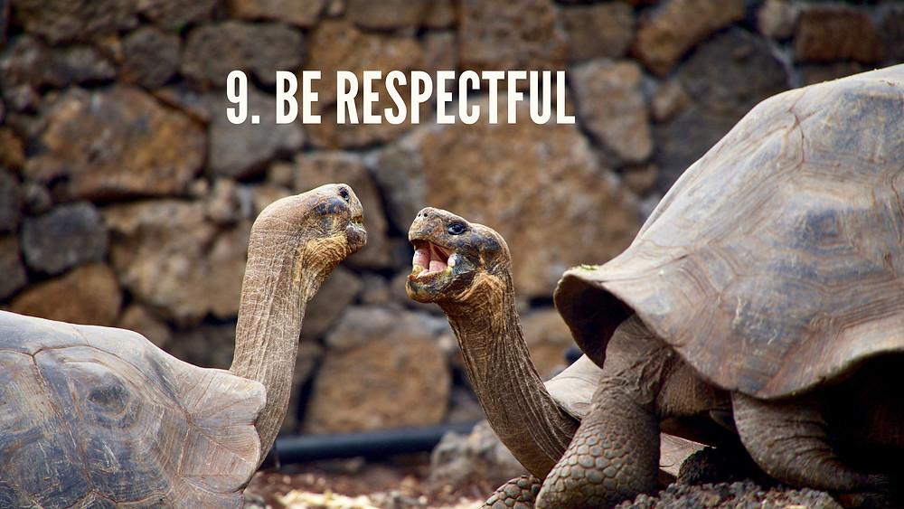 Tortoises in Galapagos