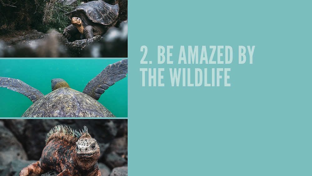 10 Best things to do in Galapagos